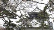 東海3県桜スポット!