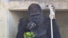 愛知が誇る2大動物園 大注目アニマル!