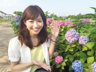 なばな紫陽花