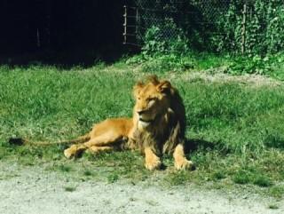 那須ライオン