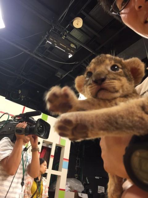 ライオン肉球