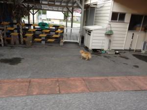 2011_06_04房総半島横断(いすみ~小湊)_102