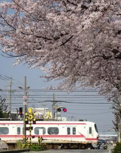 2016_04_02 桜駅の桜_6