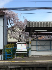 2016_04_05 桜駅の桜_4