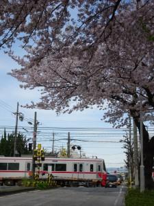 2016_04_05 桜駅の桜_14
