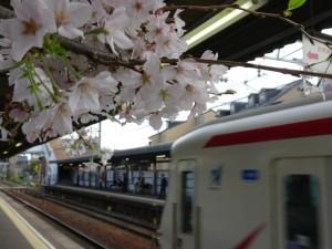 2016_04_05 桜駅の桜_12