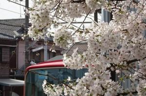 2016_04_02 桜駅の桜_8