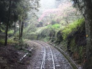 2016_03_22 阿里山森林鉄道_157