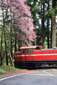 2016_03_22 阿里山森林鉄道_175