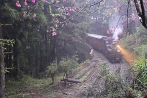 2016_03_23-2 シェイ式蒸気機関車_63