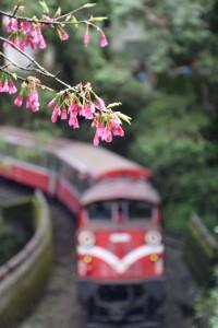 2016_03_22 阿里山森林鉄道_174
