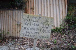 2016_08_06 大井川鐡道 撮り鉄_72